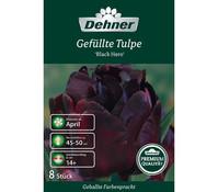 Dehner Premium Blumenzwiebel Gefüllte Tulpe 'Black Hero'