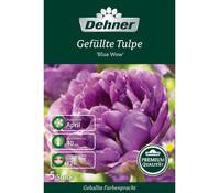 Dehner Premium Blumenzwiebel Gefüllte Tulpe 'Blue Wow'