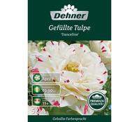 Dehner Premium Blumenzwiebel Gefüllte Tulpe 'Danceline'