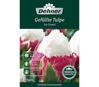 Dehner Premium Blumenzwiebel Gefüllte Tulpe 'Ice Cream'