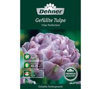 Dehner Premium Blumenzwiebel Gefüllte Tulpe 'Lilac Perfection'