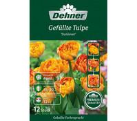 Dehner Premium Blumenzwiebel Gefüllte Tulpe 'Sunlover'