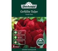 Dehner Premium Blumenzwiebel Gefüllte Tulpe 'Uncle Tom'