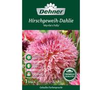 Dehner Premium Blumenzwiebel Hirschgeweih-Dahlie 'Myrtles Folly'