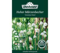 Dehner Premium Blumenzwiebel Hoher Märzenbecher 'Gravetye Giant'