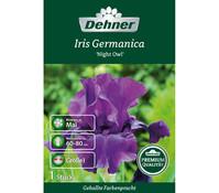 Dehner Premium Blumenzwiebel Iris Germanica 'Night Owl'