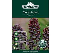 Dehner Premium Blumenzwiebel Kaiserkrone 'Adiyaman'