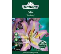 Dehner Premium Blumenzwiebel Lilie 'Tom Pouce'
