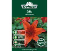 Dehner Premium Blumenzwiebel Lilien 'Feuerzauber'