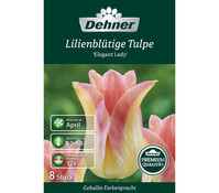 Dehner Premium Blumenzwiebel Lilienblütige Tulpe 'Elegant Lady'