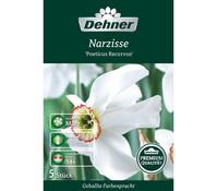 Dehner Premium Blumenzwiebel Narzisse 'Poeticus Recurvus'