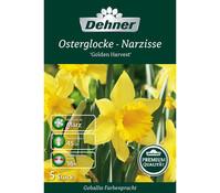 Dehner Premium Blumenzwiebel Osterglocke-Narzisse 'Golden Harvest'