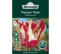 Dehner Premium Blumenzwiebel Papagei-Tulpe 'Estella Rijnveld'