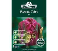 Dehner Premium Blumenzwiebel Papagei-Tulpe 'Rai'