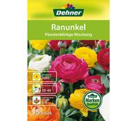 Dehner Premium Blumenzwiebel Ranunkel 'Päonienblütige Mischung'