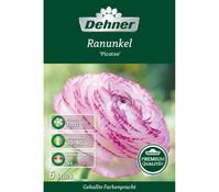 Dehner Premium Blumenzwiebel Ranunkeln 'Picotee'