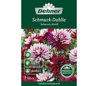 Dehner Premium Blumenzwiebel Schmuckdahlie 'Rebeccas World'