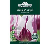 Dehner Premium Blumenzwiebel Triumph-Tulpe 'Flaming Flag'
