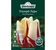 Dehner Premium Blumenzwiebel Triumph-Tulpe 'World Expression'