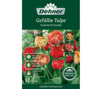 Dehner Premium Gefüllte Tulpe 'Gudoshnik Double'