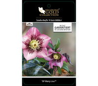 Dehner Premium Lenzrose 'SP Mary Lou' - Helleborus Gold Collection®