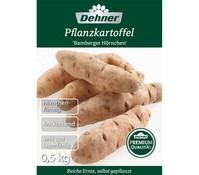 Dehner Premium Pflanzkartoffel 'Bamberger Hörnchen'