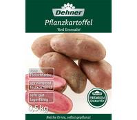 Dehner Premium Pflanzkartoffel 'Red Emmalie'