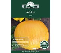 Dehner Premium Samen Kürbis 'Racer'