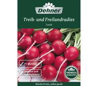 Dehner Premium Samen Treib- u. Freilandradies 'Lucia'