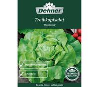 Dehner Premium Samen Treibkopfsalat 'Manouska'