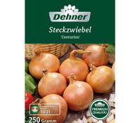 Dehner Premium Steckzwiebel 'Centurion'