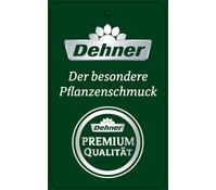 Dehner Premium Wandelröschen orange, Stämmchen