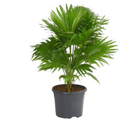 großpflanzen : dehner garten center - Grose Wohnzimmer Pflanzen