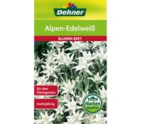 Dehner Samen Alpen-Edelweiß