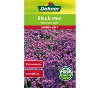 Dehner Samen Blaukissen 'Violettkönigin'