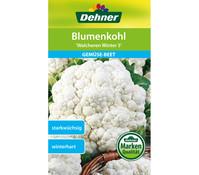Dehner Samen Blumenkohl 'Walcheren Winter 5'