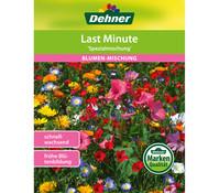 Dehner Samen Blumenmischung 'Last Minute'