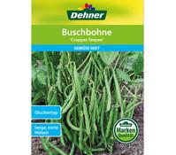 Dehner Samen Buschbohne 'Cropper Teepee'