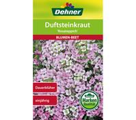 Dehner Samen Duftsteinkraut 'Rosateppich'