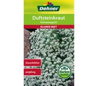 Dehner Samen Duftsteinkraut 'Schneeteppich'