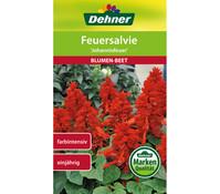 Dehner Samen Feuersalbei 'Johannisfeuer'