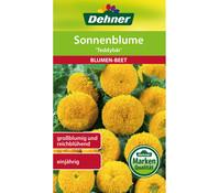 Dehner Samen für Sonnenblume 'Teddybär'