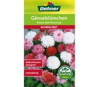 Dehner Samen Gänseblümchen 'Riesen-Ball-Mischung'