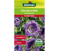 Dehner Samen Glockerebe 'Violettkönigin'
