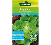 Dehner Samen Kopfsalat 'Kagraner Sommer 2'
