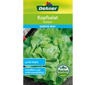 Dehner Samen Kopfsalat 'Ovation'