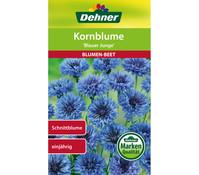 Dehner Samen Kornblume 'Blauer Junge'