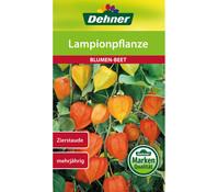 Dehner Samen Lampionpflanze
