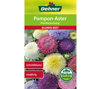 Dehner Samen Pompon-Aster 'Prachtmischung'