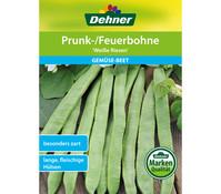 Dehner Samen Prunk-/Feuerbohne 'Weiße Riesen'